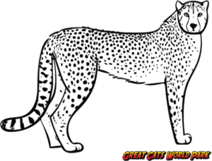Icon of Cheeta-500x386