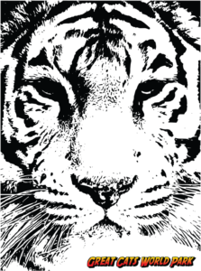 Icon of Sasha The Tiger