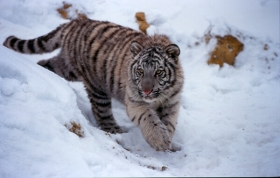 Tari in the snow