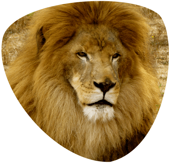 home_lion_Icon